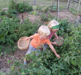 Children love to harvest in the veggie garden