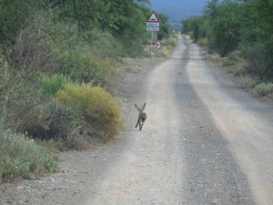 out in the karoo countryside2